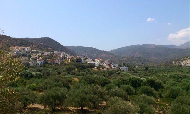 Dafni - Biologisches extra natives Olivenöl